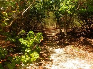 island path